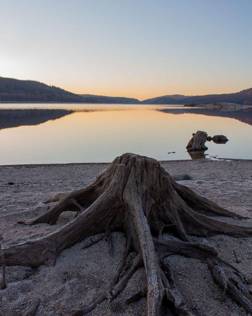 Baumstumpf am Schluchsee-Ufer